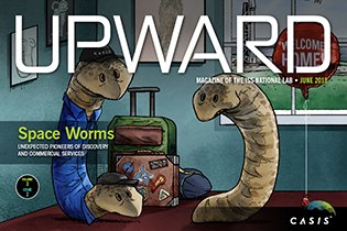 AJ flatworm upward cover