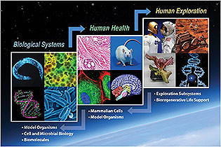human biological health exploration slide